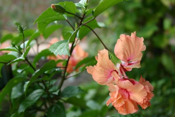 フラミンゴの画像 p1_34
