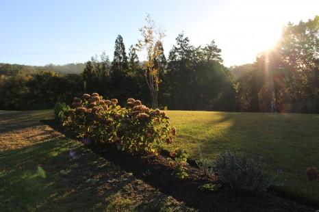 庭 モーニング